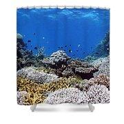 Corals Garden Shower Curtain