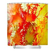 Corals In Sunrise  Shower Curtain