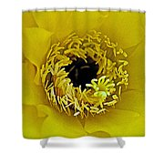 Core Of A Yellow Cactus Flower At Pilgrim Place In Claremont-california Shower Curtain