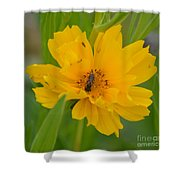 Coreopis Honey Bee Shower Curtain
