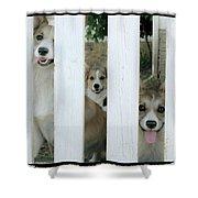 Corgis Three Shower Curtain