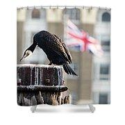 Cormorant Adult Phalacrocorax Carbo Shower Curtain