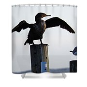 Cormorant And Seagull Shower Curtain