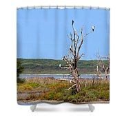 Cormorant Collective Shower Curtain