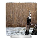 Cormorant On Post Shower Curtain
