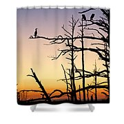 Cormorant Sunset Shower Curtain