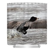 Cormorant Taking To The Air Shower Curtain