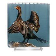Cormorant Wings Shower Curtain