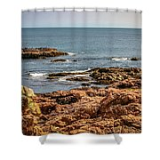 Cormorants And Seagulls Resting Shower Curtain