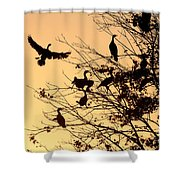 Cormorants At Sunset Shower Curtain