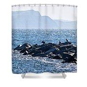 Cormorants At The Cobb - Lyme Regis Shower Curtain