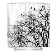 Cormorants Shower Curtain
