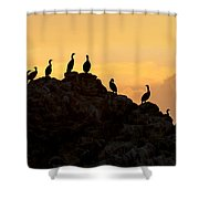 Cormorants On A Rock With Golden Sunset Sky Shower Curtain