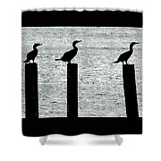 Cormorants Port Jefferson New York Shower Curtain