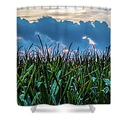 Corn And Clouds Panorama Shower Curtain