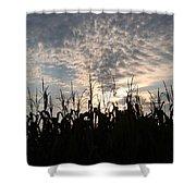 Corn At Sunrise Shower Curtain