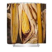 Corn Cobb On Stalk Shower Curtain
