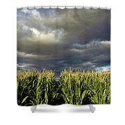 Corn Field Beform Storm Shower Curtain