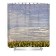 Corn Field In Sunset II Shower Curtain
