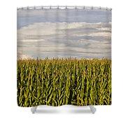 Corn Field In Sunset Shower Curtain
