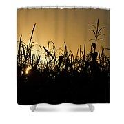 Corn Field Sunrise Shower Curtain