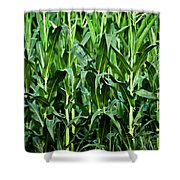 Corn Field's First Row Shower Curtain