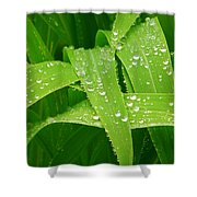 Corn Leaves After The Rain Shower Curtain