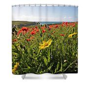 Corn Marigold And Poppies Shower Curtain