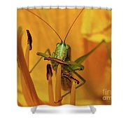 Corn On The Cob Shower Curtain
