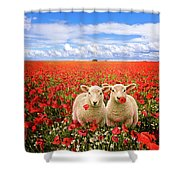Corn Poppies And Twin Lambs Shower Curtain by Meirion Matthias