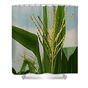 Corn Stalk Shower Curtain