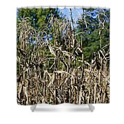 Corn Stalks Drying Shower Curtain