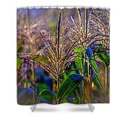 Corn Tassels Shower Curtain