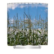 Corn Tassels In The Sky Shower Curtain