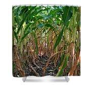 Corn Tunnel Shower Curtain