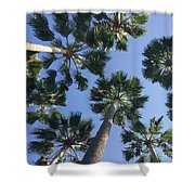 Corner Palms Shower Curtain