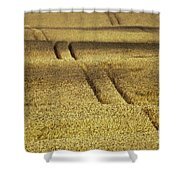 Cornfield Shower Curtain