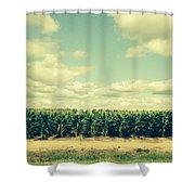Cornfield In Missouri  Shower Curtain