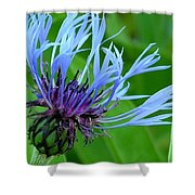 Cornflower Centaurea Montana Shower Curtain