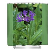 Cornflower Purple Surprise V1 Shower Curtain