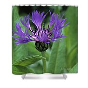 Cornflower Purple Surprise V2 Shower Curtain