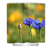 Cornflowers -1- Shower Curtain by Issabild -