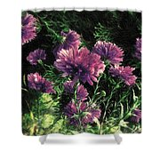 Cornflowers Autumngraphy - Photopainting Light Shower Curtain