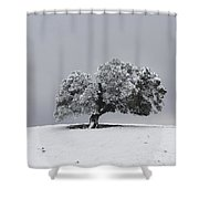 Corral Hollow Tree In Snow Shower Curtain