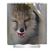 Corsac Fox- Vulpes Corsac 01 Shower Curtain