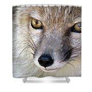 Corsac Fox- Vulpes Corsac 02 Shower Curtain