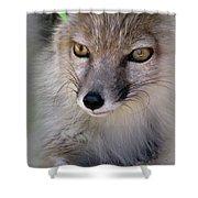 Corsac Fox- Vulpes Corsac 03 Shower Curtain