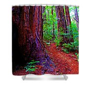 Cosmic Redwood Trail On Mt Tamalpais Shower Curtain
