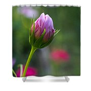Cosmos Baby Shower Curtain