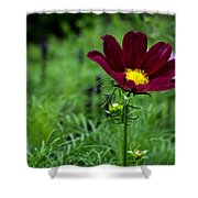 Cosmos Shower Curtain
